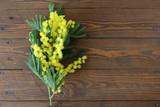 Mimose simbolo della festa delle donne e della primavera