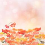 Poppy Flowers Blossom - Fine Art prints