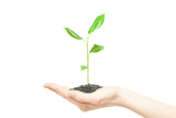 Human hands holding green small plant new life concept - 103352384