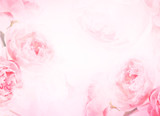 the sweet pink rose flowers for love romance background - 103379798