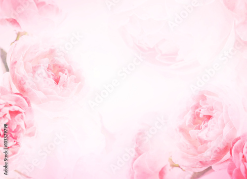 the sweet pink rose flowers for love romance background
