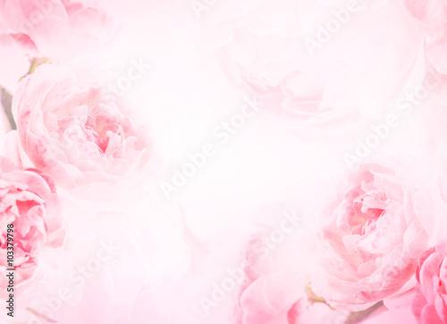 słodkie różowe kwiaty róży na tle miłości miłości