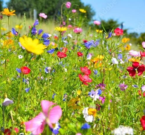 Fototapeta Grußkarte - Blumenwiese - Sommerblumen