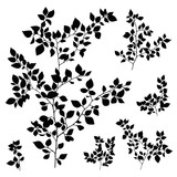 branches leaves silhouette set - 103405557