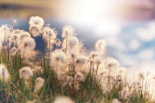 Polar flowers - 103524557
