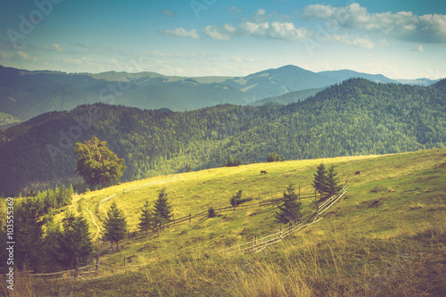 fototapeta na ścianę Beautiful mountain landscape. View of the meadow and cows grazing on it.