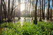 Cypress swamp in northern Florida