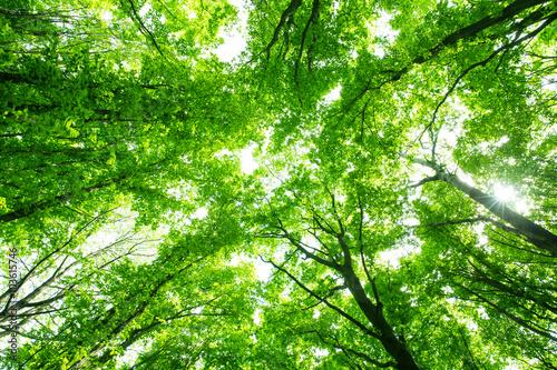 Fototapeta beautiful green forest