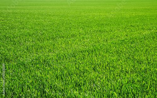mata magnetyczna grass