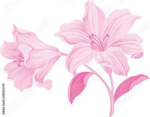 Lily kwiaty. Kwitnąca lilia. Karta lub kwiatowy tło z kwitnących kwiatów lilii. Sylwetka leluja kwiaty odizolowywający na białym tle. Ilustracji wektorowych.