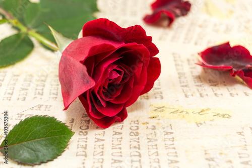 czerwona-roza-na-zoltym-tle