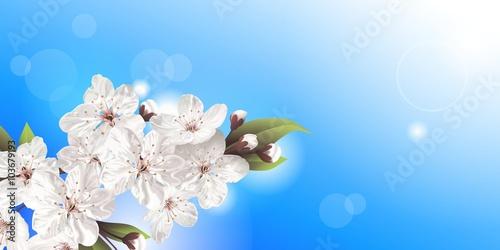 Zdjęcia na płótnie, fototapety, obrazy : Spring flowers, blooming tree  branch, white blossoms against blue sky