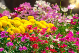 Flowers in the garden./ Landscaped flower garden with lots of colorful blooms with sun flare. - Fine Art prints