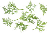 Dill herb set options path included isolated on white background - 103711358