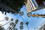 Beautiful view of palms and sky in Hollywood boulevard, Los Ange