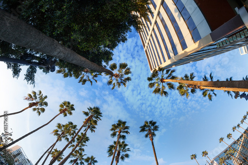 Beautiful view of palms and sky in Hollywood boulevard, Los Ange Poster