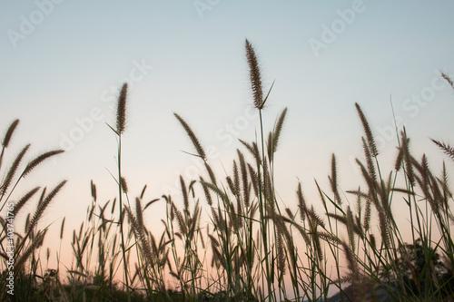 kwiat-zmierzch-piekno-niebo-i-chmury-w-tajlandia