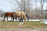 manada de caballos en la nieve
