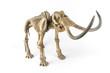 Постер, плакат: Skeleton of a mammoth