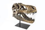 Tyrannosaurus Rex skeleton