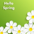 Beautiful Spring Flowers green Background