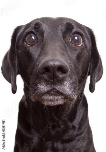 Poster Shocked Dog