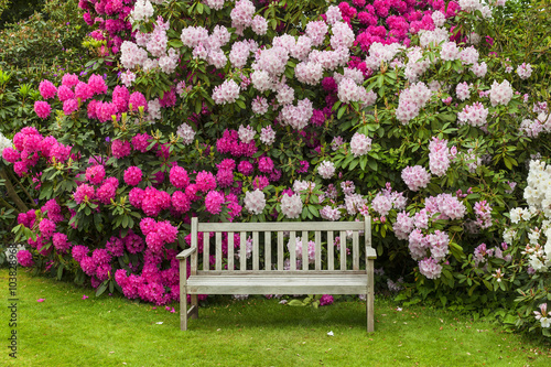 mata magnetyczna Rhododendron garden with wooden bench.