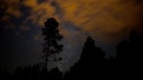 Stars of the Milky Way pass behind a tall pine tree