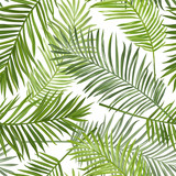 Seamless Tropical Palm Leaves Background - for design, scrapbook - 103870992