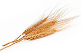 barley ear over a white background - 103886129