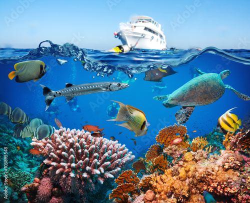 Fotobehang Koraalriffen Tropical Fish and Coral Reef