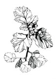 Tree branch - 103906550