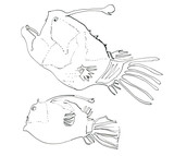 Fish2 - 103906581