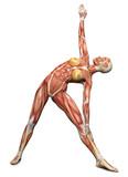 3D female medical figure in yoga pose