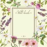 Fototapety Vector vintage colorful hand-drawn frame with wild flowers and medicinal herbs. Design for cosmetics, store, beauty salon, natural and organic products. Can be used like a greeting card.