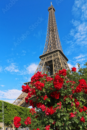 Poster Eiffel Tower behind red rose bush