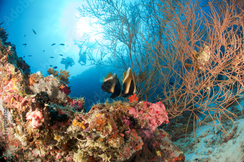 Poster CORAL REEF
