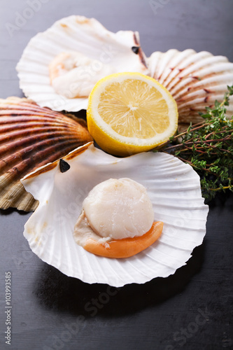 Poster Raw fresh scallops in the shell with lemon