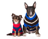two dogs in knitted sweaters
