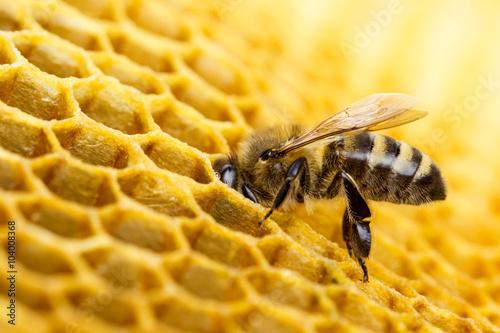 Aluminium Bee Bee