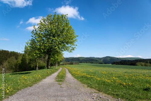 Poster Landschappen Feldweg im Frühling - Wandern in Sachsen