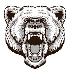 Angry Bear Head. Vector illustration