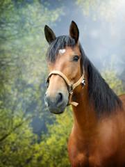 Brown horse in spring landscape © sidliks
