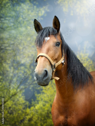 Brown horse in spring landscape