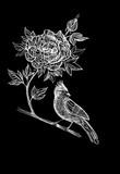 Peony flower and bird on branch - 104073368