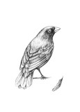 Little bird sitting on a branch and feather - 104073973