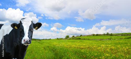 Illustrazione di una prateria con una mucca curiosa che sbircia - 104073905
