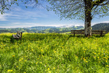 Frühlingswiese im Emmental, Schweiz - 104074150