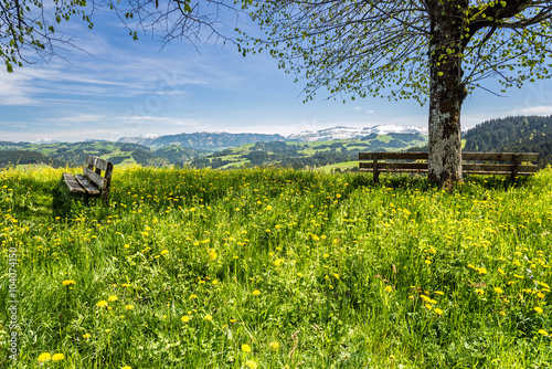 Fototapeta Frühlingswiese im Emmental, Schweiz