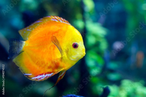 obraz PCV colorful sea fish in the aquarium